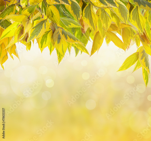 Nature background with autumn foliage and bokeh