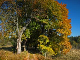 sunny colorful autumn road