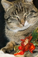 Cat with Christmas Tree Toy