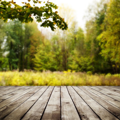 wood planks over forest