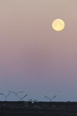 Seabirds under full moon
