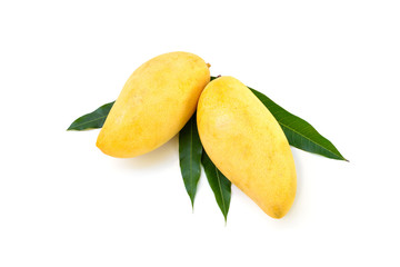 Yellow mango isolated