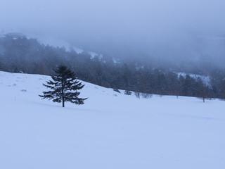 雪の美ヶ原の一本松