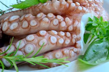 Fresh octopus 5