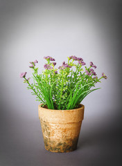 flower in pot on grey background