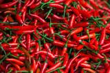 Fototapety Red Chili Pepper