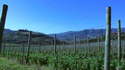 Vineyard in Tuscany in february