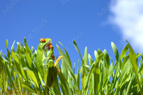 Tuinposter Kikker Red eyed tree frog