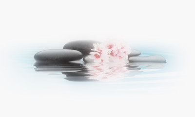 stones with flower isolated white background vintage