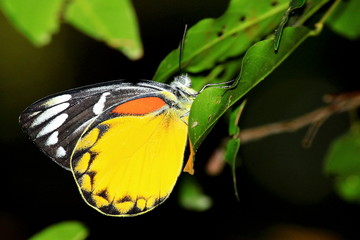 A butterfly with colorful wings