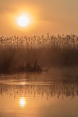 sunrise among reeds