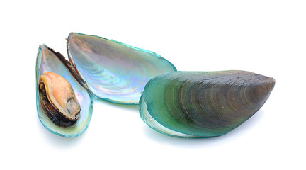 mussels in shells isolated on white background