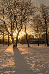 Rising sun shining through a birch tree in a winter park