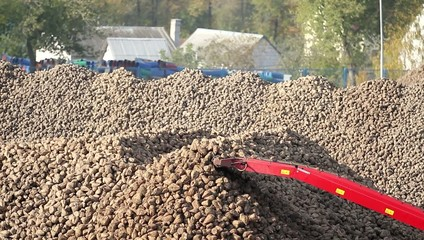 sugar beets in a freight train