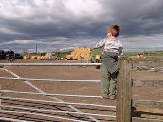 small boy on gate