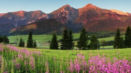 Beauty mountain panorama with flowers - Slovakia motion