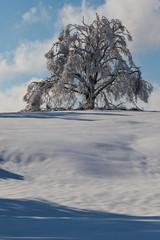 Snow, tree and blu sky