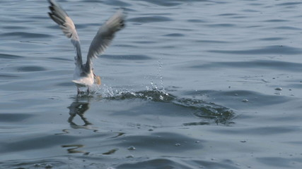 Seagulls flying midair