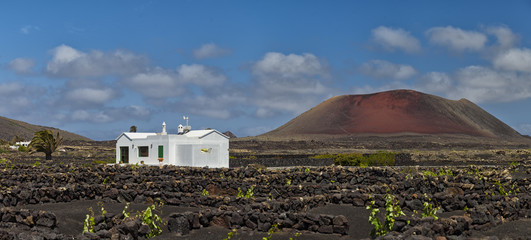 Lanzarote landscape. VIneyards and volcanoes.