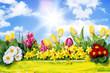canvas print picture - Frühjahr Frühblüher in der Natur