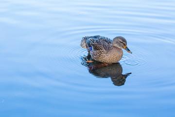 Wellen und Vogel im Wasser