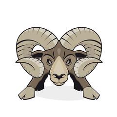 widder steinbock mufflon