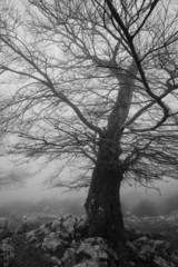 Braccia d'inverno