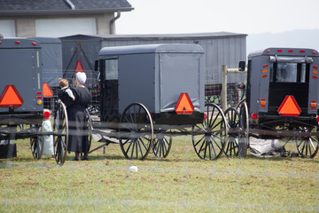 Black Amish buggies lined up