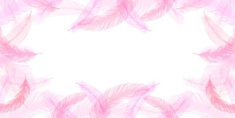 羽 ピンク 背景