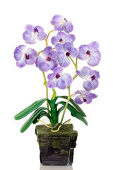 Orchid pot isolated on a white background