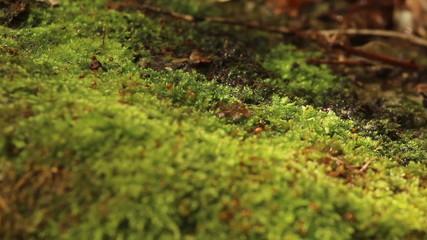 Rich moss