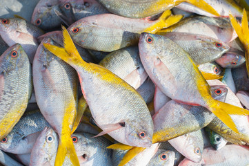 Commercial fish