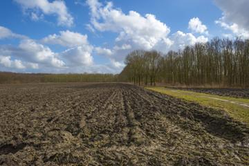 Footpath in a sunny field in winter