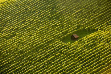 Wineyard cottage amidst vine rows