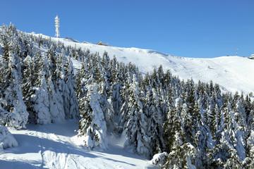 Kopaonik mountain in winter