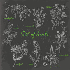 Set of isolated herbs in sketch style on dark background