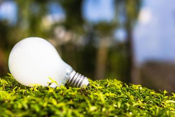 Light bulb on plant