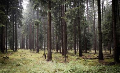 Wald - Soltau