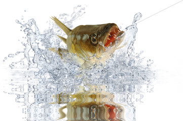 Fische 104