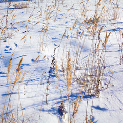 Dry Grass with Snowy Background Landscape