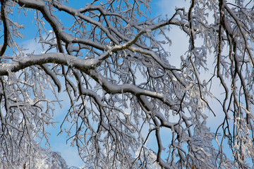 Tangles of branches and ice