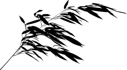 one long black bambooisolated  branch
