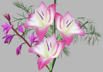 group of large pink flowers isolated on grey background