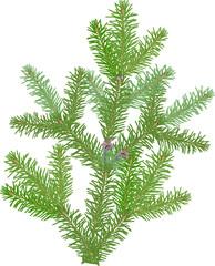 small green fir branch on white