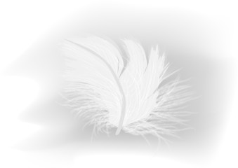 white feather on light grey background