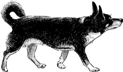 funny black hound