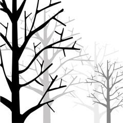 Forest Monotone