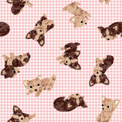 犬のパターン