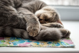 Lazy cat sleeping on windowsill. Selective focus. poster
