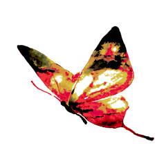 butterfly522